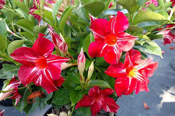 Citrus County Fl Plant Tree Nursery